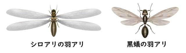 クロアリシロアリ羽あり